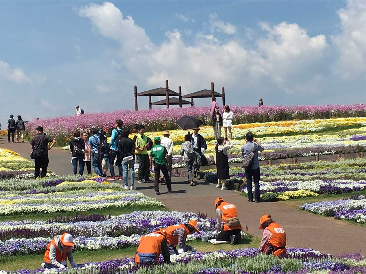 シニアボランティア。来場者の笑顔のために(信州花フェスタ2019)(松本市) の画像