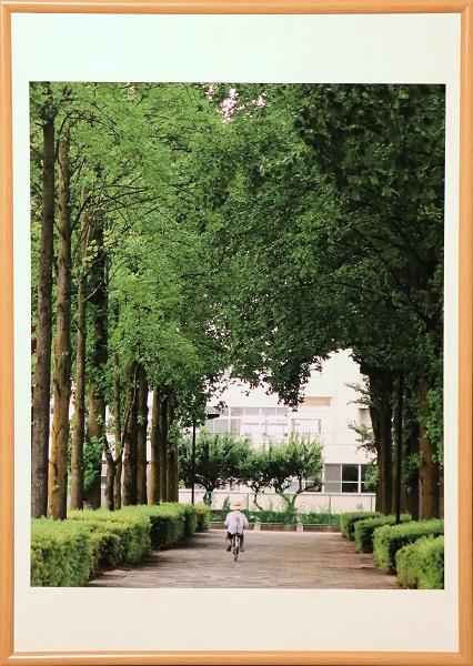 公園の並木道のイメージ