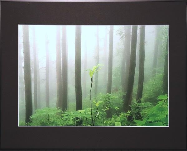 緑霧林のイメージ